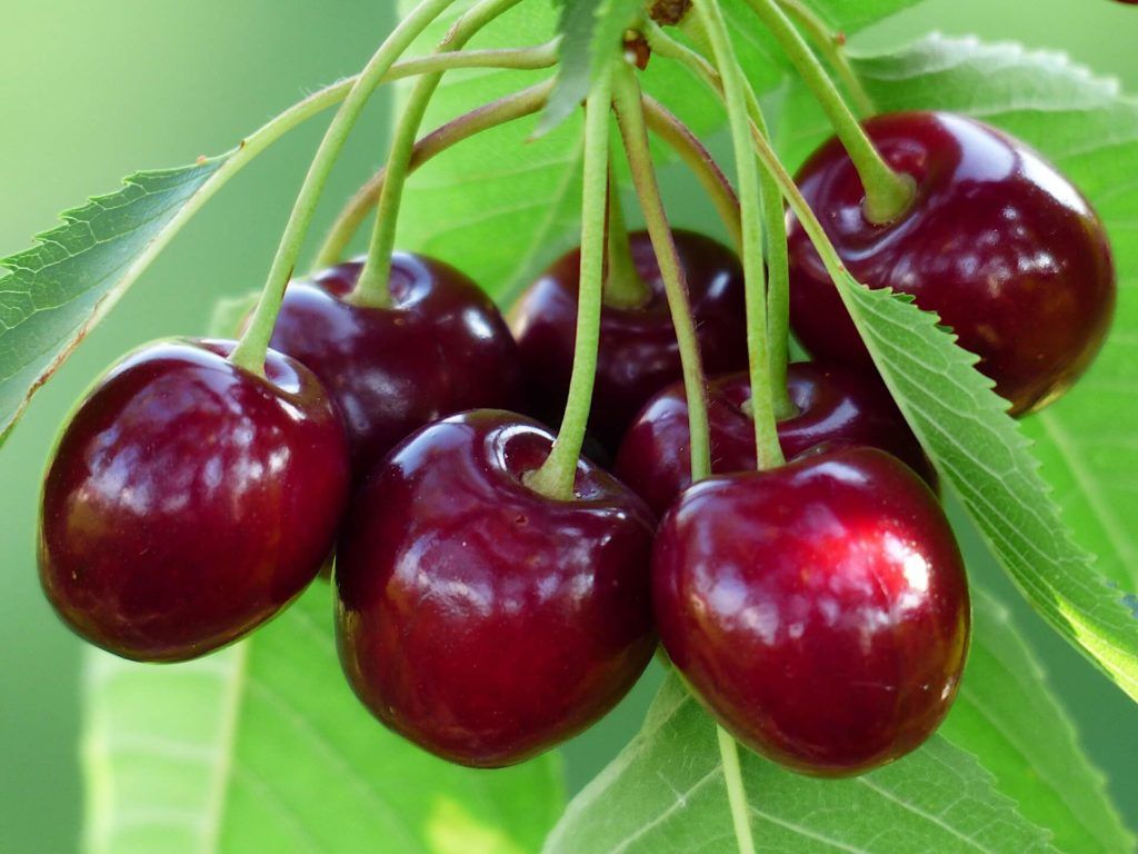 vitamin-P-Cherries